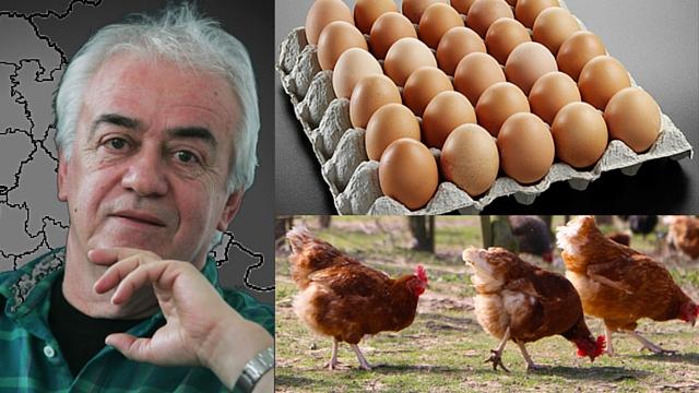 Sudbina živinarstva u Srbiji - stečaj ili spas u jajima u prahu!?