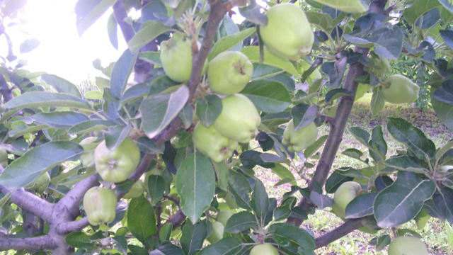 Za bavljenje organskom poljoprivredom potrebna su nova znanja