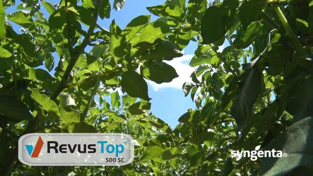 Syngenta fungicidi – Revus Top®