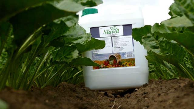 Primena Slavola u šećernoj repi - za jake, otporne i slatke biljke