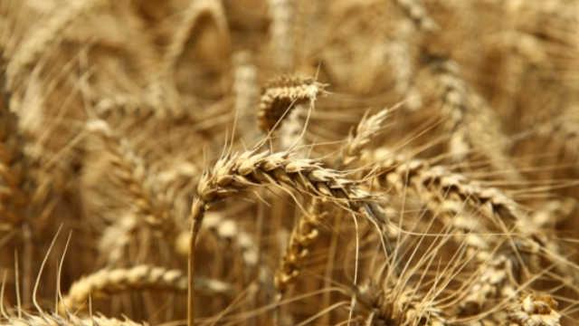 Vesti - Nezavisna asocijacija poljoprivrednika Srbije najavljuje proteste
