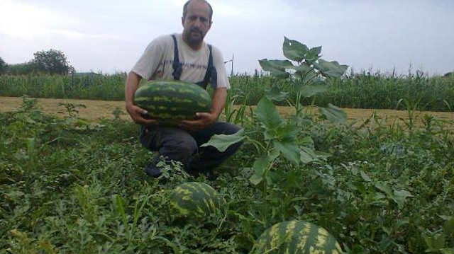 Sve više poljoprivrednika se odlučuje za organsku proizvodnju