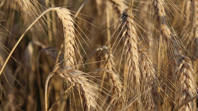 Mala vajda: Uprkos teškim uslovima ne odustaju od poljoprivrede!