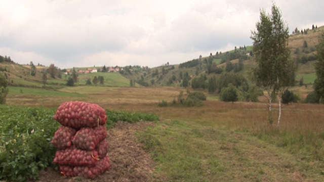 Evo kako je bilo na Danu polja krompira u Aljinovićima