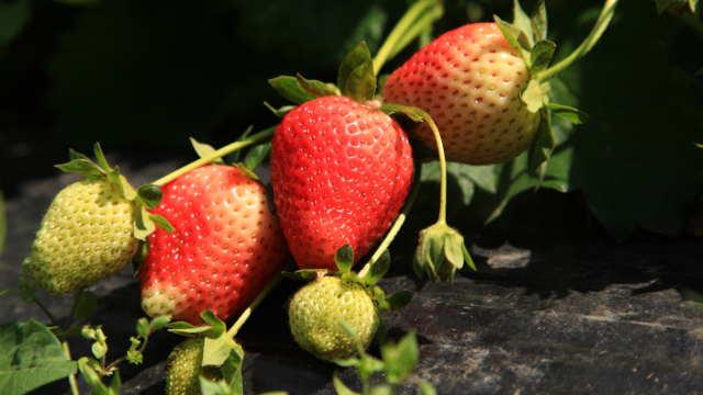 Vesti - Susreti proizvođača organske hrane u Selenči