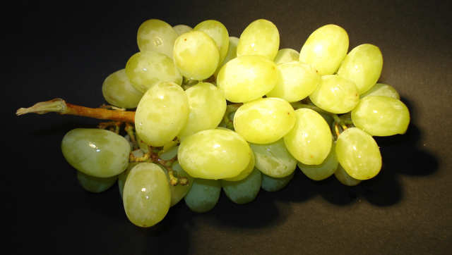 Ove godine PADAVINE UGROZILE kvalitet vinskih sorti!