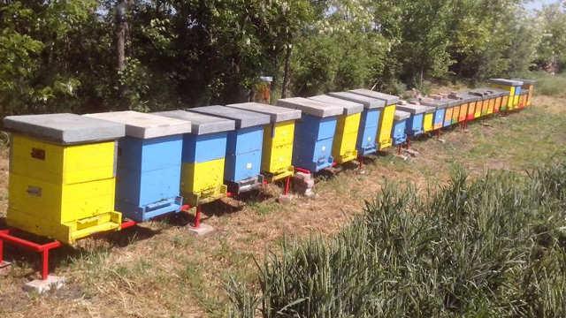 Kako pobediti upornu varou i pripremiti pčele za zimu