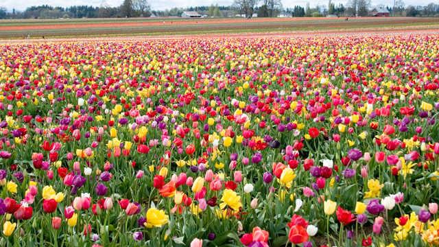 Sve što niste znali o jesenjim vrstama cveća
