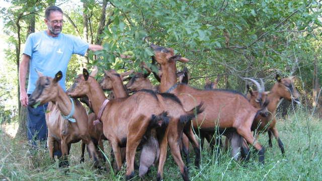 Koze vraćaju Šumadince na selo