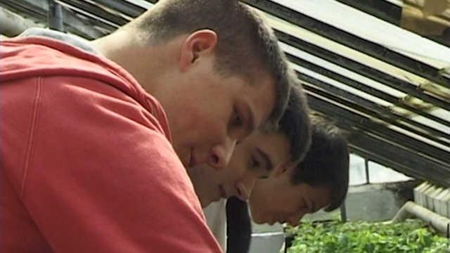 Vesti - Mladima u Kikindi obezbeđena plaćena radna praksa