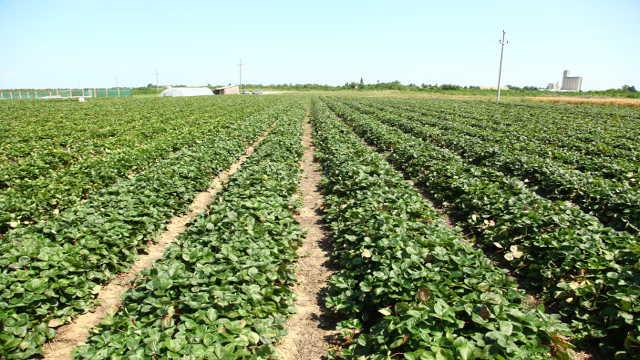 Vesti - Opština Blace ove godine uložila 23 miliona dinara za razvoj poljoprivrede!