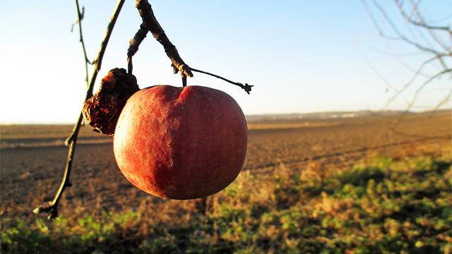 Poslednja slast jeseni (AGROFOTO)