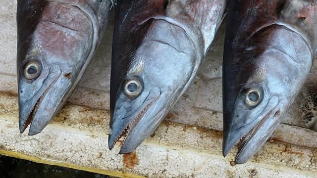 Pojačana kontrola ispravnosti ribe tokom posta