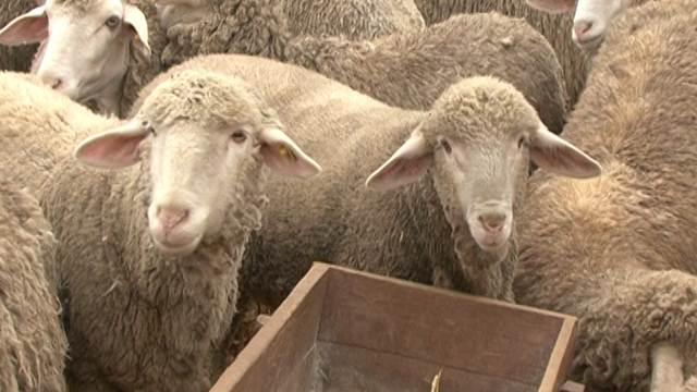 25 miliona dinara za razvoj stočarstva u Vojvodini