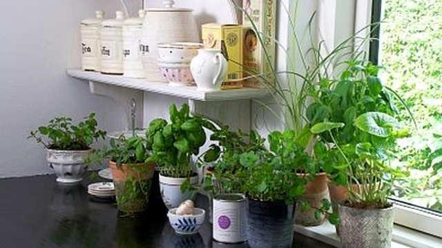 Saveti stručnjaka: Gajenje biljaka u saksiji sve popularnije