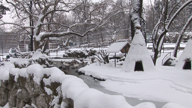 Kako životinje u Beogradskom zoološkom vrtu podnose niske temperature