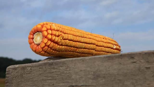 Već 5 godina zaredom padaju cene hrane u svetu