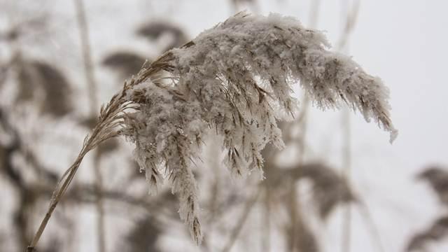Sneg povoljno utiče na sve poljoprivredne kulture