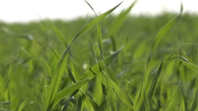 Ove godine dodatni podsticaji za poljoprivrednike u Kikindi
