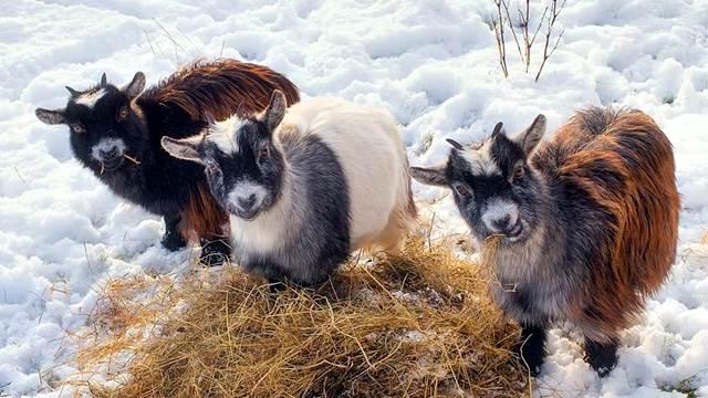 Zaštitite životinje od zime!