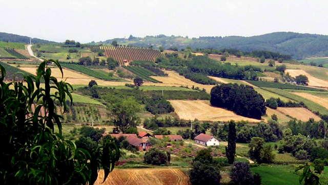 Levačko vinogorje - na pragu stare slave