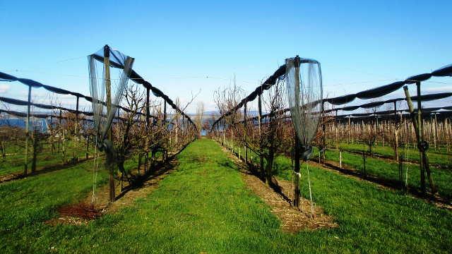 Kako pravilno obaviti zimsko prskanje voćnjaka