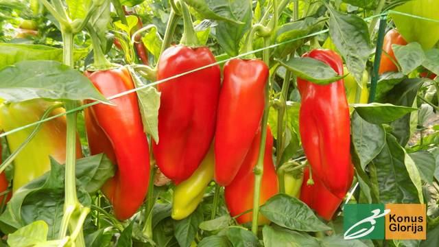 Konus Glorija - Sve što je potrebno za uspešnu poljoprivrednu proizvodnju