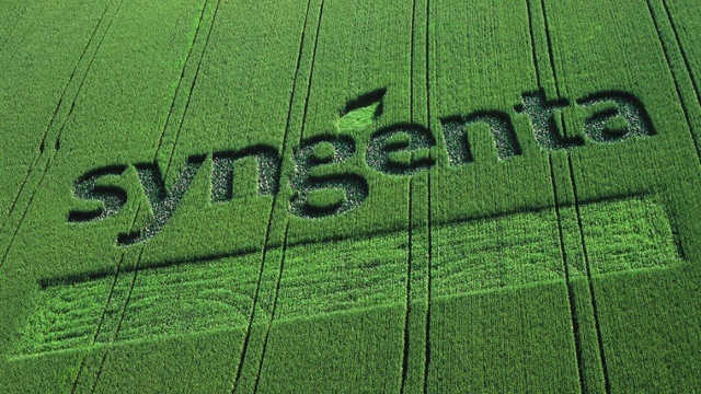 """Svi hibridi kukuruza kompanije """"Syngenta"""" na jednom mestu"""