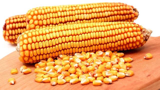 Kakva je ove godine potražnja za ZP hibridima kukuruza