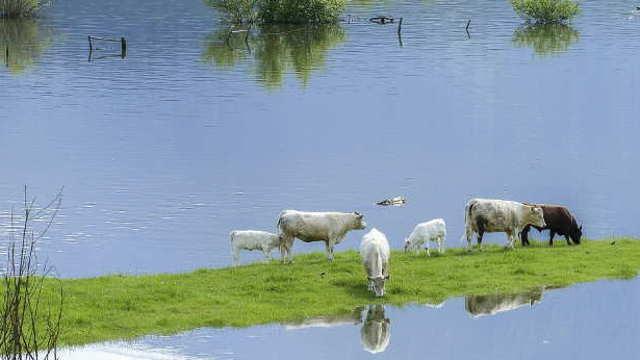 Poljoprivreda u Obrenovcu tri godine kasnije