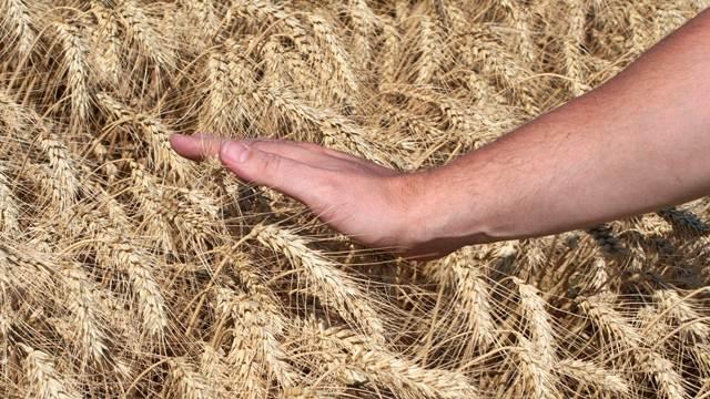 Poljoprivredni krediti za prolećnu setvu