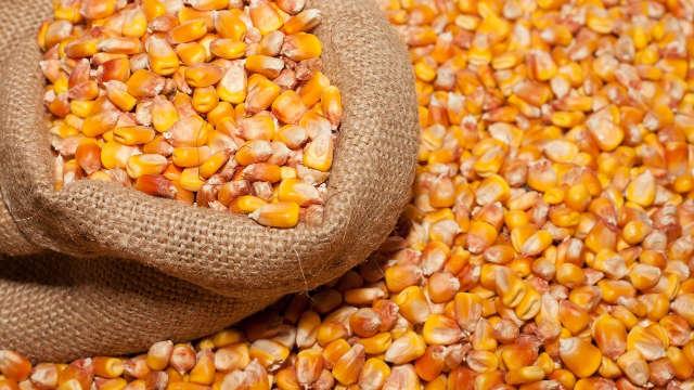 RWA hibridi kukuruza – jer vas neće izneveriti