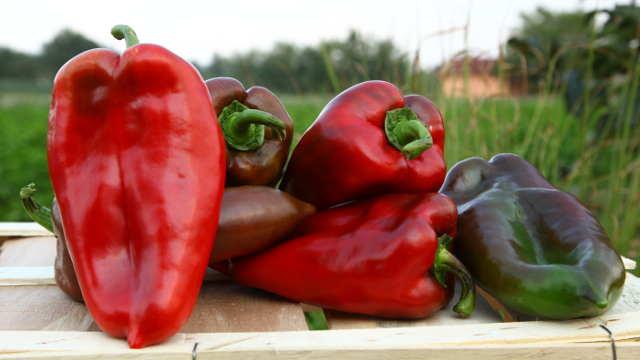 Zašto je Slonovo uvo najpopularnija sorta paprike u Bugarskoj