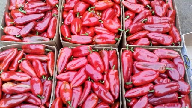 MERAK –  jedna sorta paprike za veći broj kupaca