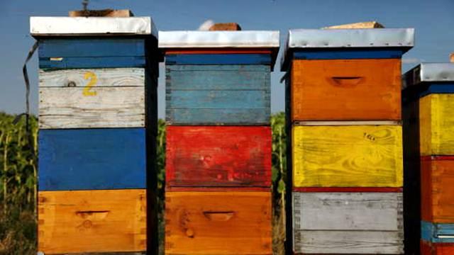 Do 50 odsto bespovratnih sredstava za investicije u pčelarstvu
