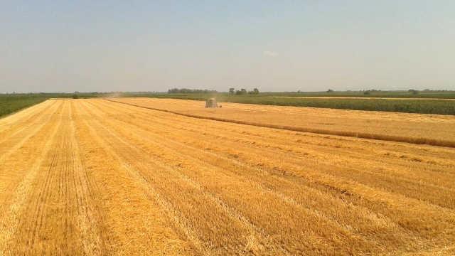 3 preparata za uspešnu zaštitu pšenice od bolesti i korova