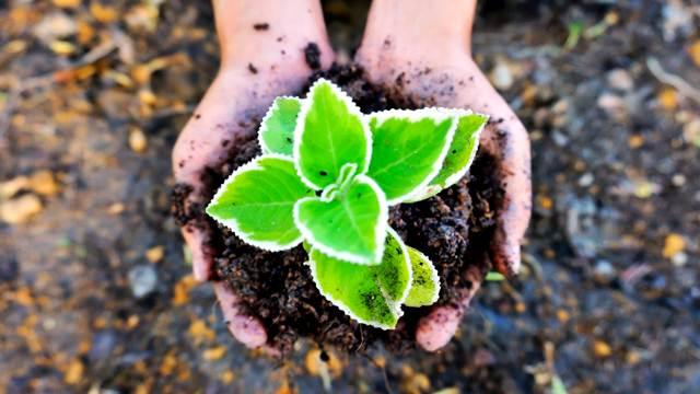 Plodnost zemljišta u plasteničkoj proizvodnji postiže se pravilnom negom!