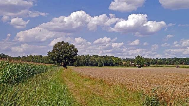 Jagodina raspisala javni poziv za zakup i korišćenje poljoprivrednog zemljišta