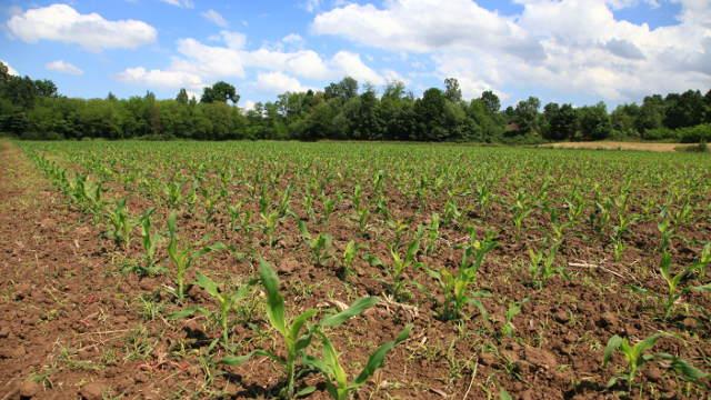 Sve o predsetvenoj pripremi zemljišta za setvu kukuruza