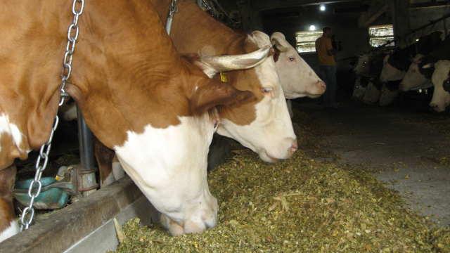 Saveti za stočare - krmna smeša za bolji kvalitet mesa