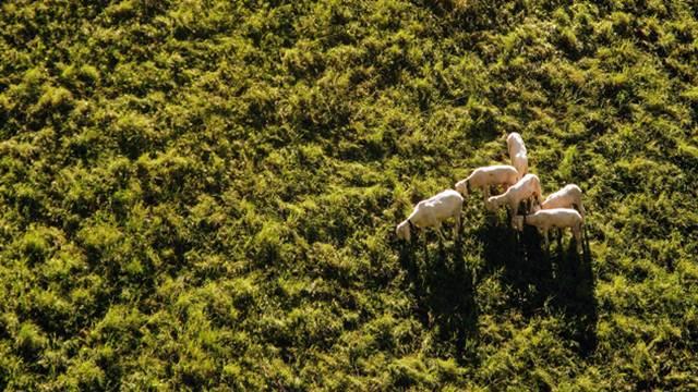 Primena dronova u poljoprivredi: da ili ne?