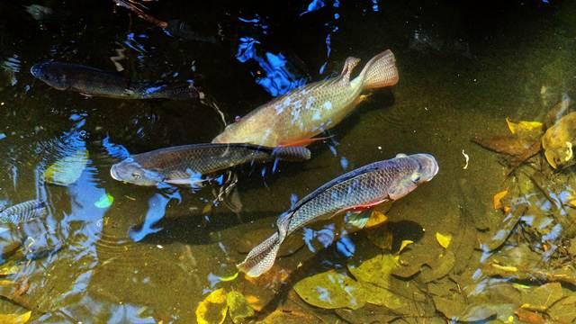 Sredstva za podizanje ribnjaka i nabavku opreme za gazdinstva