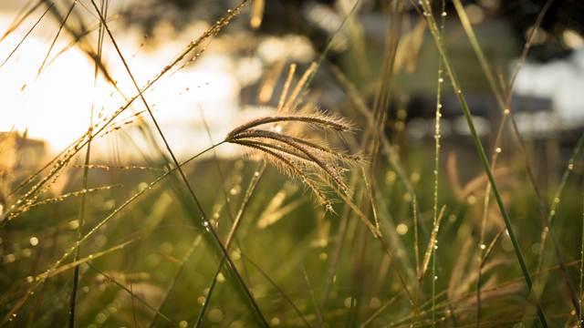 Kako da prirodnim putem suzbijete korove u vašoj bašti