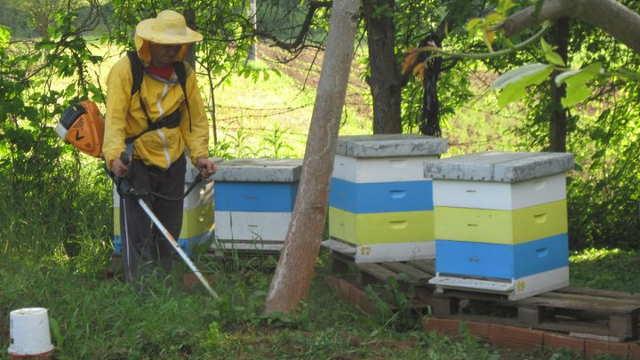 Od pčelarstva može da se ubere i dobra zarada