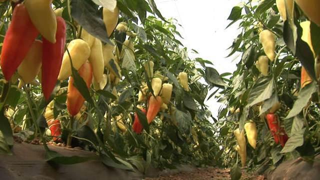 Preventivne mere u zaštiti biljaka od nematoda