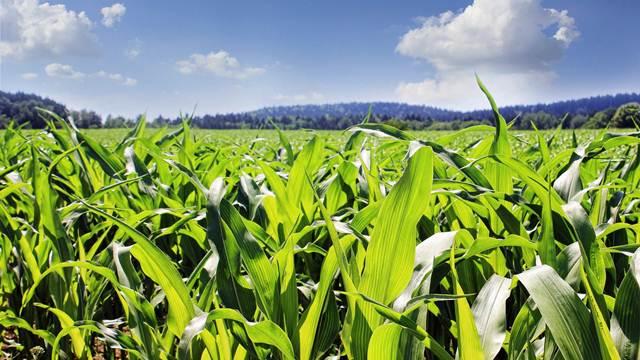 Pravovremeni tretman semena - tajna snažne biljke i kvalitetnog ploda