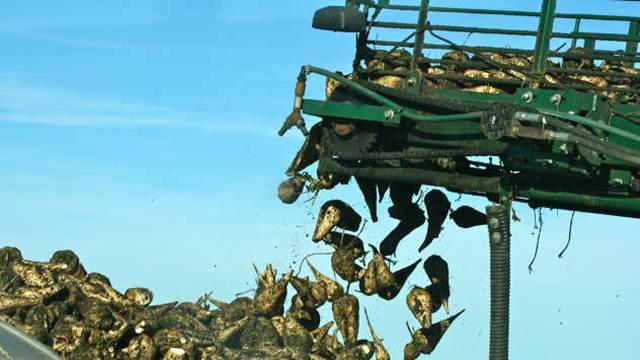 Raste proizvodnja šećerne repe u EU - Cene neizvesne
