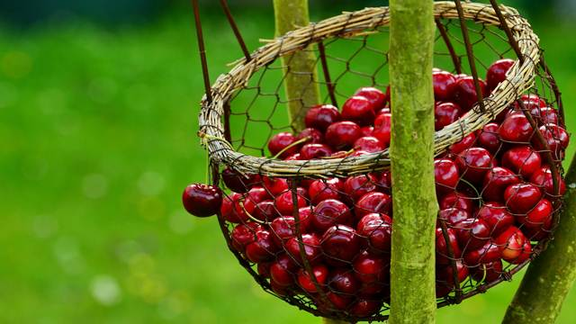 SAVETI: Odaberite kvalitetne sadnice voća