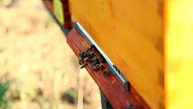 Pčele ugrožene: EU zabranjuje upotrebu pesticida