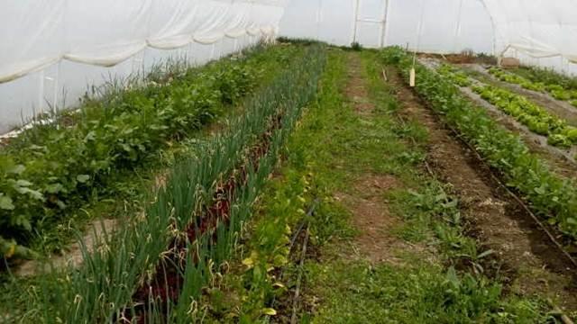 Farm inkubator u Selenči - škola za organske proizvođače